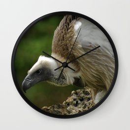 White-backed Vulture Wall Clock