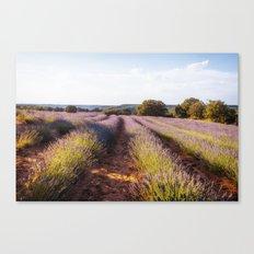 Lavender Fields at Sunset Canvas Print