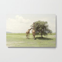 giraffes::rwanda Metal Print
