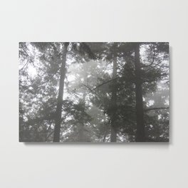 Foggy trees Metal Print