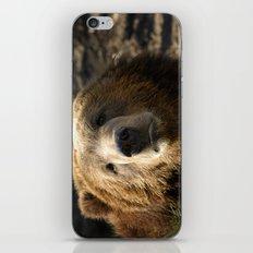 A big sad Teddy Bear iPhone & iPod Skin