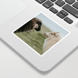 Sheeply in Love - Animal Photography from Iceland Sticker
