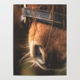Soft Horse Nose Poster