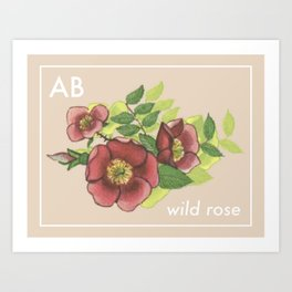 Provincial Flowers - Alberta Art Print