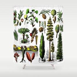 Various gymnosperms Shower Curtain