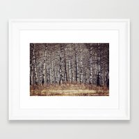 birch Framed Art Prints featuring birch by Leanne Taylor Collection