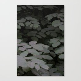 Leaves in the dark Canvas Print
