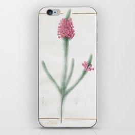 Pierre Joseph Redouté - Erica Fulgida iPhone Skin