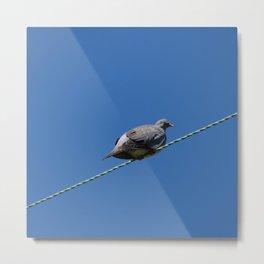 Wood Pigeon Metal Print