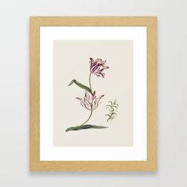 Botanical illustration of tulips and one lily Framed Art Print