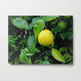 The Lemon Metal Print