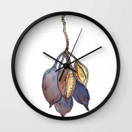 Kurrajong seed pod Wall Clock