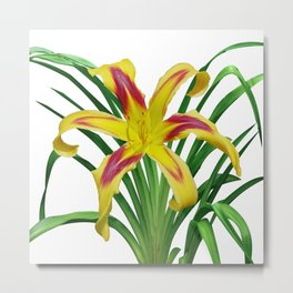 Daylily Solo - Hemerocallis 'Free Wheelin' on white Metal Print