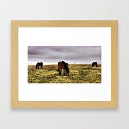 Exmoor Ponies Framed Art Print