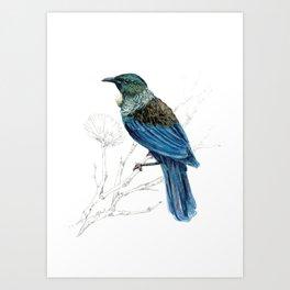 Tui, New Zealand native bird Art Print