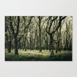 Moss Forest Canvas Print