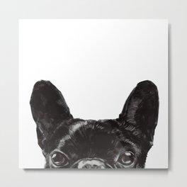 Peeking French Bulldog Metal Print