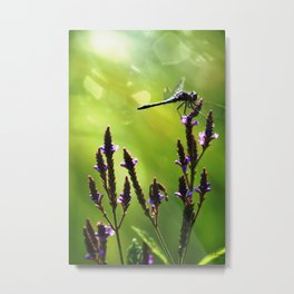 Sunny Day Dragonfly Metal Print