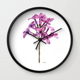 Lilac Syringa Vulagaris Wall Clock