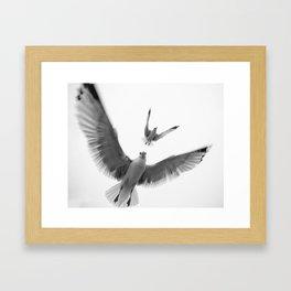 Seaguls {Eight} Framed Art Print