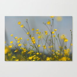 Yellow flowers 2 Canvas Print