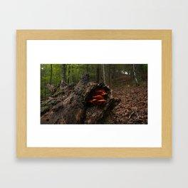 Newt Framed Art Print