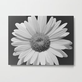 Black & White Daisy Contemporary Flower Modern Cottage A494 Metal Print