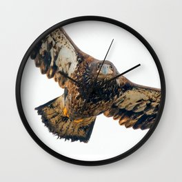 Young Bald Eagle in Breathtaking Flyby Wall Clock