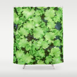 Lettuce Hydroponic farm, Lettuce Sprouts, Green Young Lettuce Plants Shower Curtain