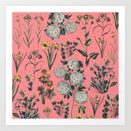 White flowers in pink Art Print