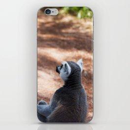 Lemur Catta III iPhone Skin