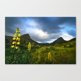 Lupins at Whatipu looking back to the Waitakere Ranges Canvas Print