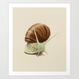 Snail Two Art Print