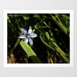 Blue Flower Art Print