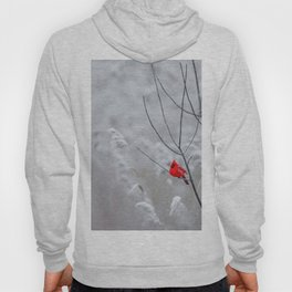 Red Robin Winter Snow (Color) Hoody