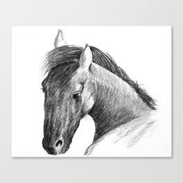 Equine Spirit Canvas Print