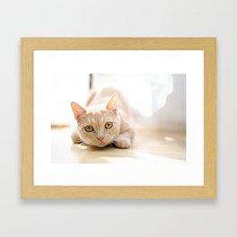 The pouncing kitty Framed Art Print