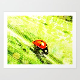 Coccinelle - version light Art Print