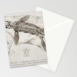 Comatula Mediterranea illustrated by Charles Dessalines D Orbigny (1806-1876) Stationery Cards