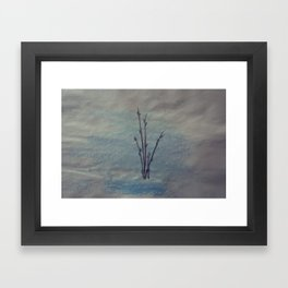 Pussy Willows Framed Art Print