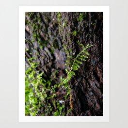 Moss growing up a tree Art Print