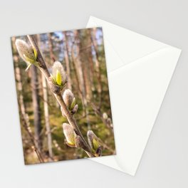 Pussy Willow Stationery Cards