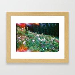Colorado Wildflowers Framed Art Print