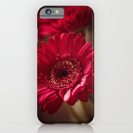 Beautiful Red Gerbera iPhone Case