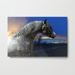 Welsh Pony Stallion Metal Print