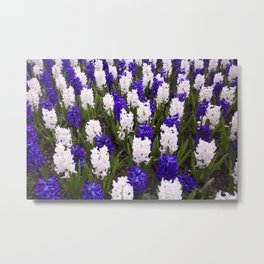 Hyacinth, Scents of Summer Metal Print