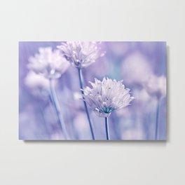 Allium blue macro 038 Metal Print