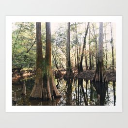 Old Growth Cypress Art Print