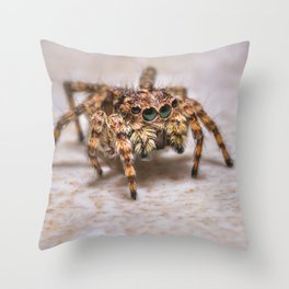 Orange-Brown Jumping Spider, On A Kitchen Tile. Macro Photograph Throw Pillow