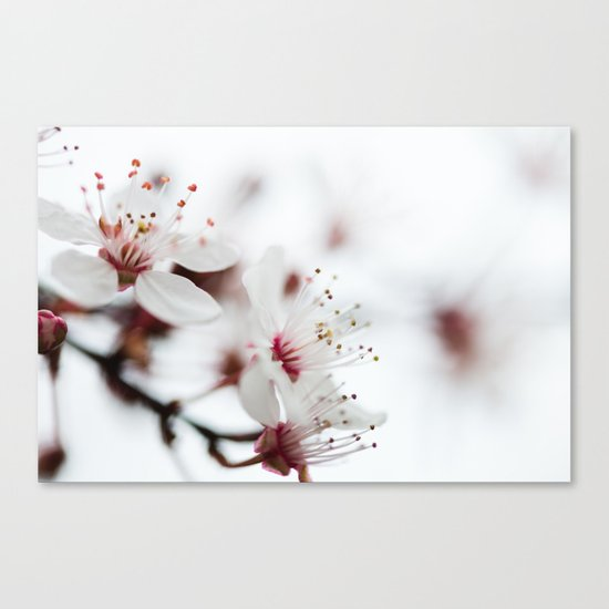 Plum Tree Canvas Print